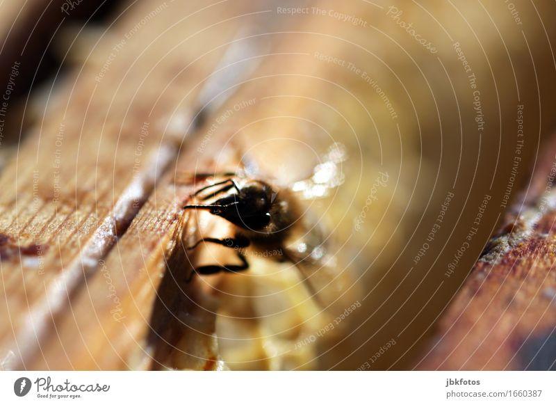 süß / Hobbyimkerei Lebensmittel Ernährung Umwelt Natur Tier Schönes Wetter Nutztier Biene Bienenstock Bienenwaben Flüssigkeit Freundlichkeit Gesundheit