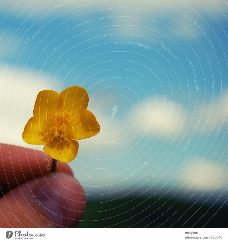 der sommer naht! Farbfoto Außenaufnahme Nahaufnahme Detailaufnahme Textfreiraum rechts Textfreiraum oben Tag Schatten Kontrast Silhouette Unschärfe Umwelt Natur