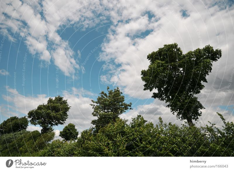 tree nursery Farbfoto Außenaufnahme Textfreiraum links Textfreiraum oben Tag Starke Tiefenschärfe Zufriedenheit Sinnesorgane Erholung ruhig Duft Kur Umwelt