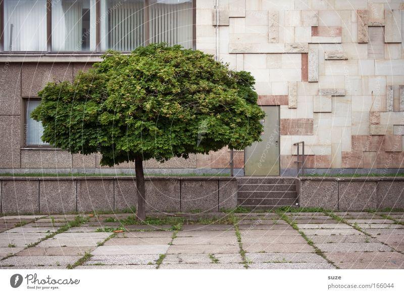 Ein Baum Farbfoto Außenaufnahme Menschenleer Tag wandern Arbeitsplatz Industrie Kunstwerk Kultur Umwelt Natur Pflanze Klima Wetter Park Stadt Stadtrand Haus
