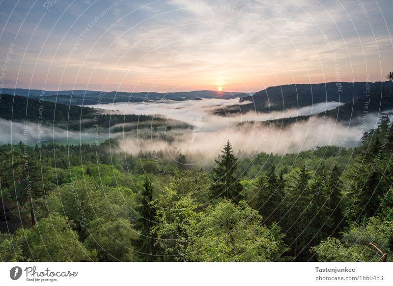 Sunrise Himmel Natur Sonne Baum Landschaft Wald Umwelt Deutschland Nebel wandern Schönes Wetter Dresden Elbe Elbsandsteingebirge Sächsische Schweiz