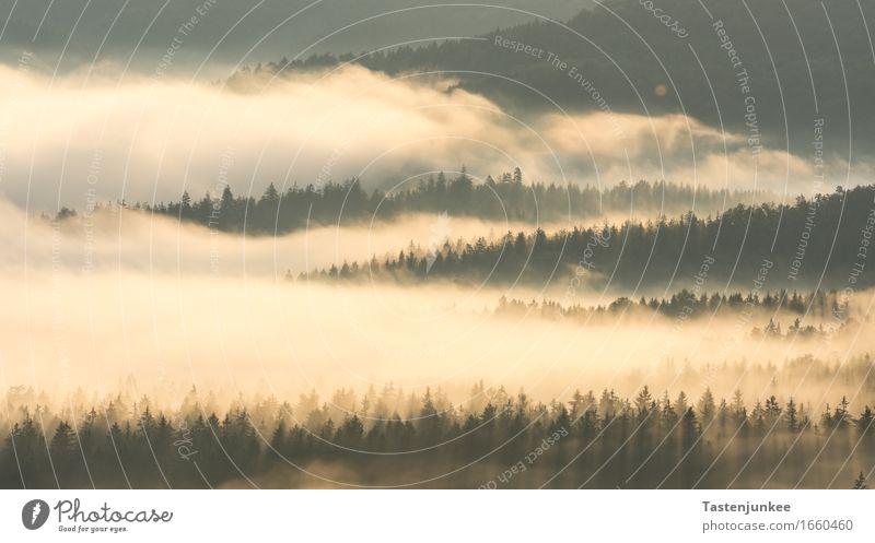 Morning Fog Landschaft Sonnenaufgang Sonnenuntergang Sonnenlicht Frühling Schönes Wetter Nebel Baum wandern Morgen Morgendämmerung Morgennebel Wald Deutschland