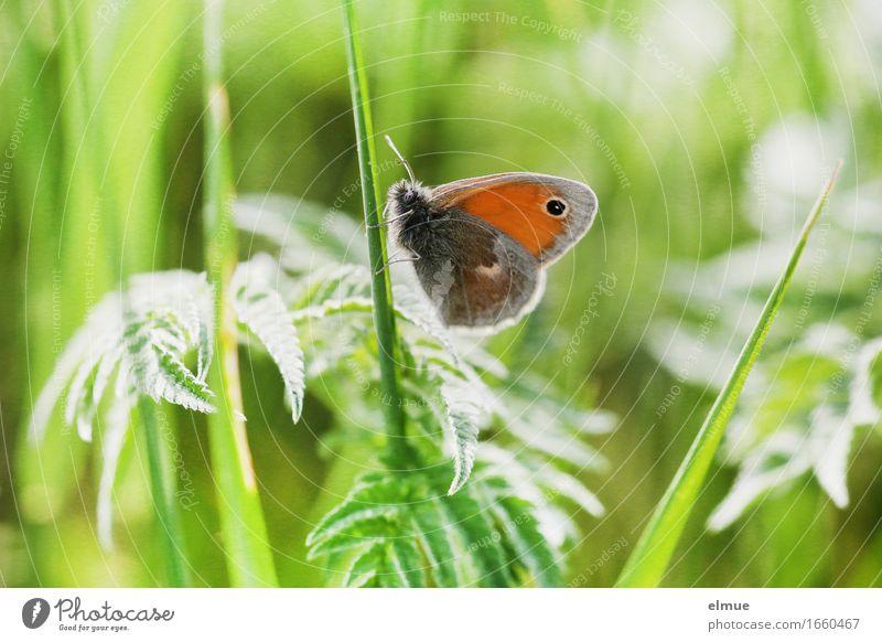 im Makrodschungel Natur Pflanze grün Tier Umwelt Auge Wiese Gras klein Design orange träumen Zufriedenheit frei warten Lebensfreude