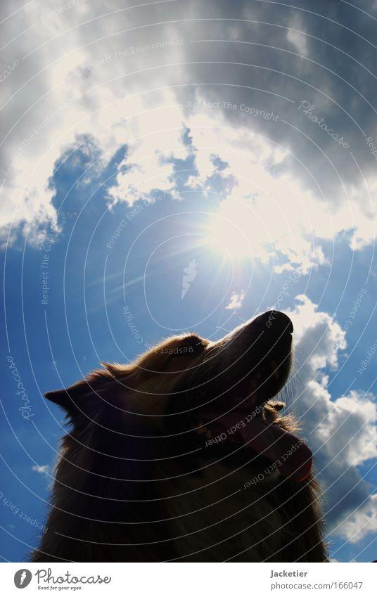 Hund III Hund blau weiß Tier braun Kraft entdecken Jagd Haustier Umarmen Willensstärke füttern toben Streichelzoo