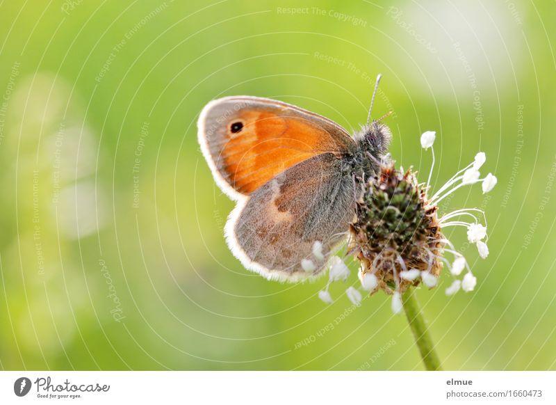 ... mit Tischdeko Natur Pflanze schön grün Tier Blüte Wiese Gras klein Glück Freiheit orange träumen Wachstum elegant ästhetisch