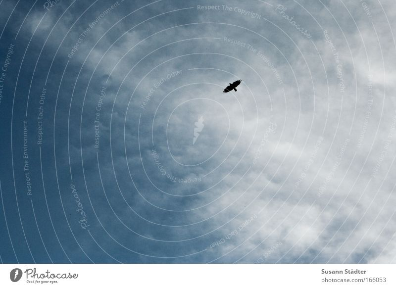 Himmel über Berlin Sonne Wolken ruhig Ferne Freiheit Stil Luft träumen Vogel Zufriedenheit wild hoch Ausflug Design Erfolg Häusliches Leben