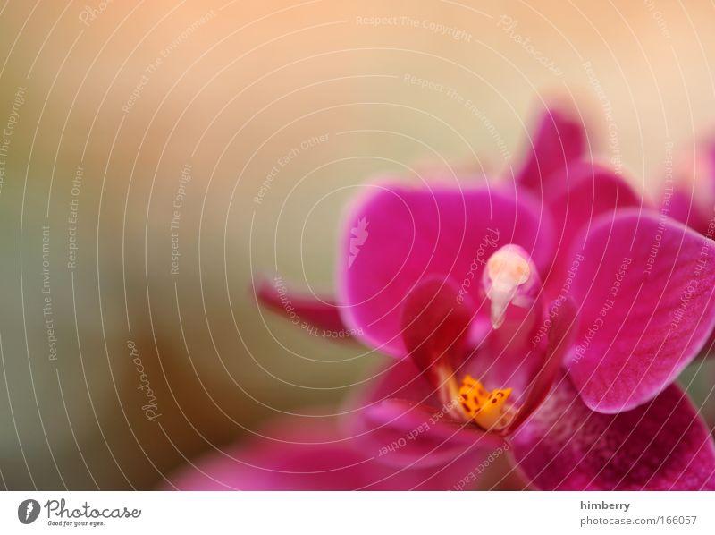 creamy pink Natur schön Blume Pflanze Freude Erholung Stil Blüte Glück Zufriedenheit rosa Design elegant frisch ästhetisch Wellness