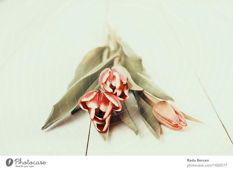 Roter Tulpen-Blumenstrauß auf Tabelle Umwelt Natur Pflanze Frühling Blatt Blüte Blühend frisch schön retro mehrfarbig grün rosa rot weiß Frühlingsgefühle