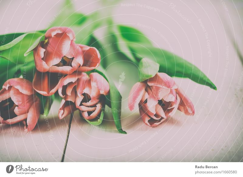 Frische Frühlings-Tulpen auf Holztisch Natur Pflanze Blume Blatt Blüte Garten Blühend einfach frisch schön natürlich Originalität retro Sauberkeit mehrfarbig