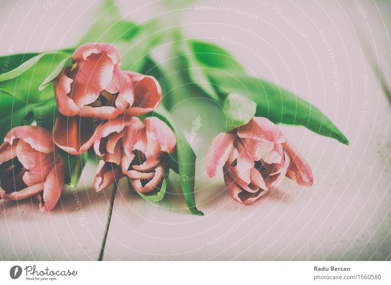 Frische Frühlings-Tulpen auf Holztisch Natur Pflanze Farbe grün schön weiß Blume rot Blatt Blüte Liebe Gefühle natürlich Garten rosa