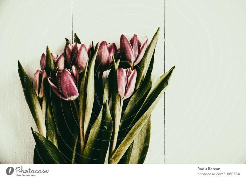 Roter Tulpen-Blumenstrauß auf hölzerner Tabelle Natur Pflanze schön grün Farbe weiß rot Blatt Liebe Blüte Gefühle Freundschaft elegant Blühend einzigartig