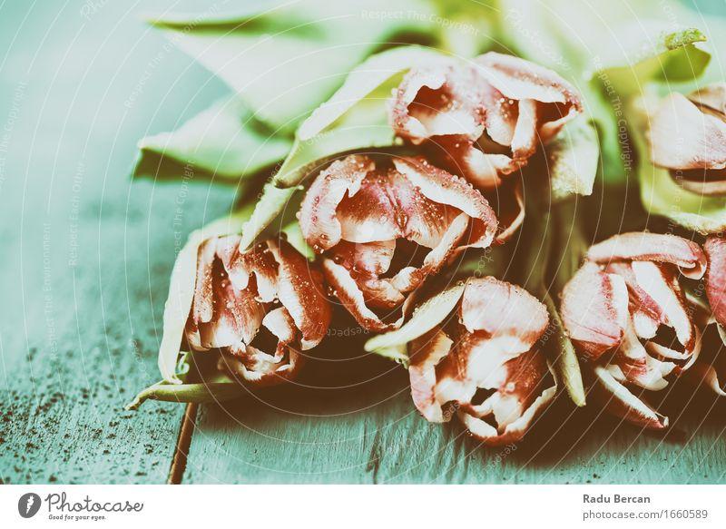 Rosa Tulpen auf Türkis Wood Table Natur Pflanze blau Farbe grün schön Blume rot Blatt Umwelt Blüte Liebe Frühling rosa frisch Wassertropfen