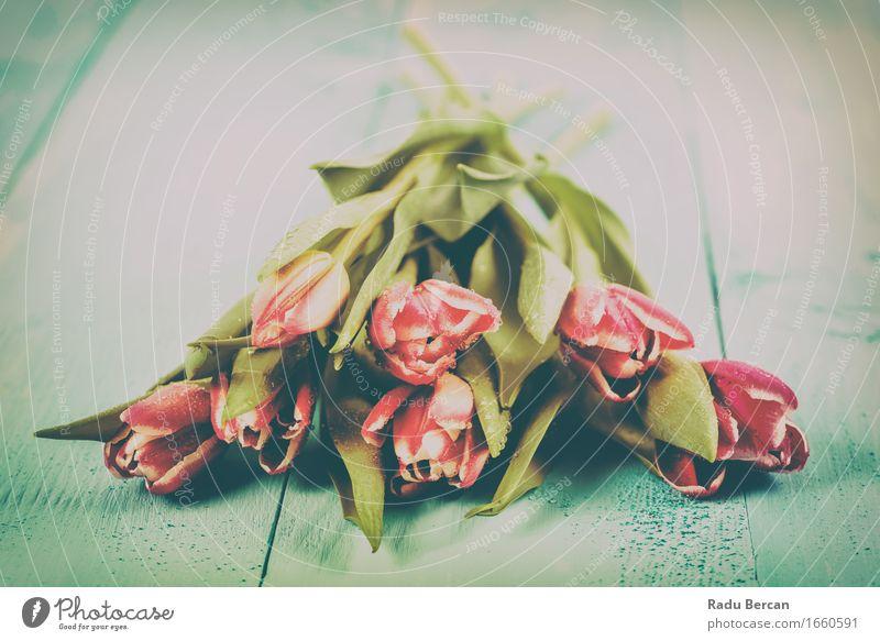 Frühling blüht Tulpe-Blumenstrauß auf Tabelle Natur Pflanze Farbe grün schön rot Blatt Umwelt Blüte Liebe natürlich rosa frisch retro