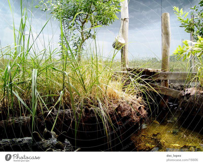 perfect world Steg grün Gras Halm Baum Landschaft Küste Wasser Plastikwelt Stimmung Natur