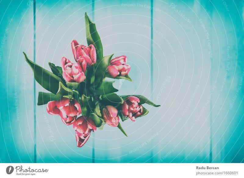 Nasse rosa Tulpen-Blumen im Vase Umwelt Natur Pflanze Wassertropfen Frühling Blatt Blüte Topfpflanze Holz Blühend blau grün rot türkis Frühlingsgefühle Farbe