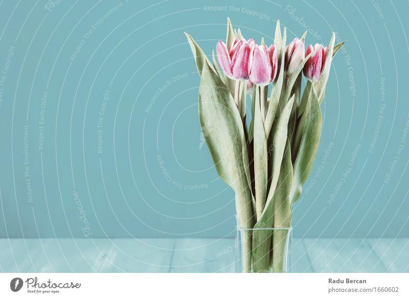 Nasse rosa Tulpen-Blumen im Vase Natur Pflanze blau Farbe schön grün Blatt Umwelt Blüte Frühling Tisch Blühend Blumenstrauß türkis