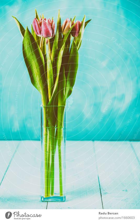 Nasse rosa Tulpen-Blumen im Vase Natur blau Pflanze Farbe schön grün rot Blüte Liebe Gefühle Holz Tisch Blühend Romantik