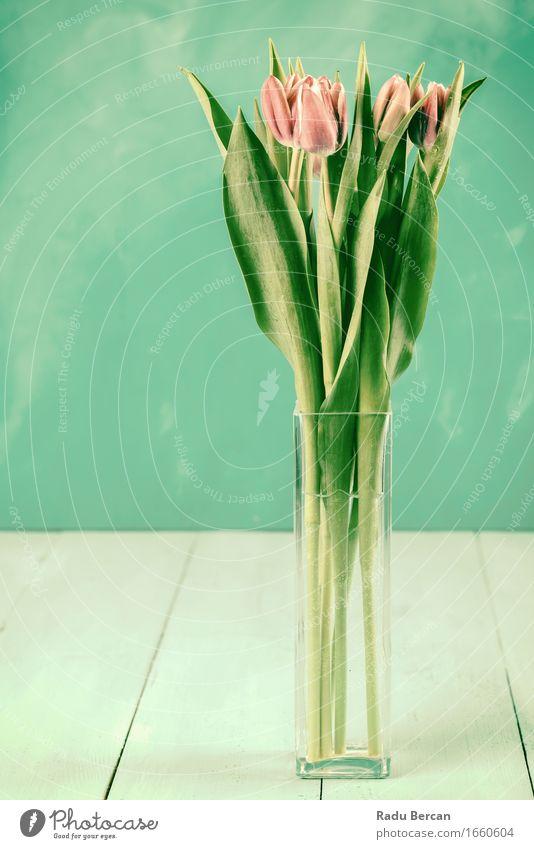 Nasse rosa Tulpen-Blumen im Vase Natur Pflanze Frühling Blatt Blüte Topfpflanze Container Blühend blau grün rot türkis Farbe Tulpenblüte Wasser Tisch Holztisch