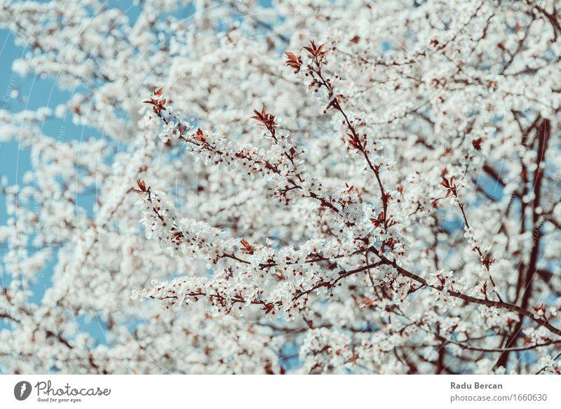 Himmel Natur blau Pflanze Farbe schön weiß Baum Blume Umwelt Blüte Frühling Gefühle braun Wachstum frisch