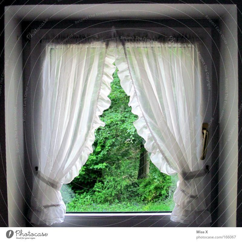 das Fenster zum Hof Haus Wald Fenster Garten Dekoration & Verzierung Sauberkeit Häusliches Leben Dorf Idylle Innenarchitektur Stoff Vorhang Gardine kuschlig Traumhaus Rüschen