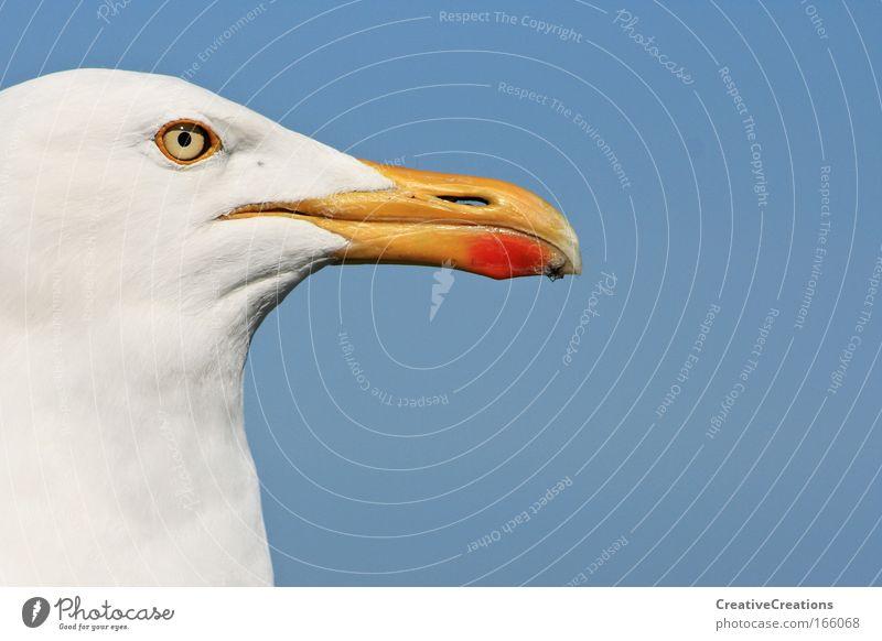 * Möwe mit Weitblick * Farbfoto Außenaufnahme Textfreiraum rechts Textfreiraum oben Tag Tierporträt Profil Ferne Freiheit Sommer Meer Wildtier Vogel Tiergesicht