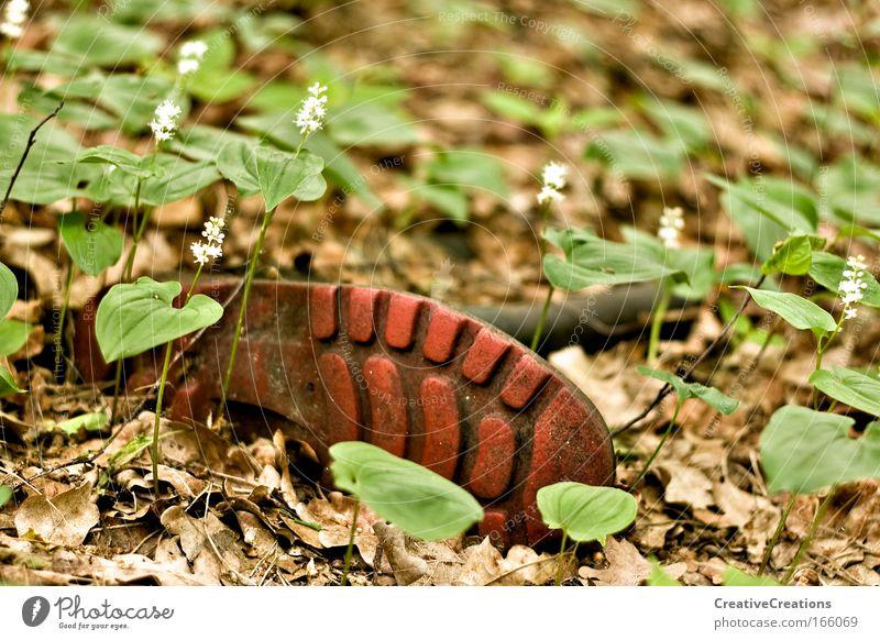 * Stiefel im Wald * Natur Pflanze Blatt Schuhe Angst wandern Umwelt Erde Müll Wald Stiefel Umweltverschmutzung Entsetzen Waldboden