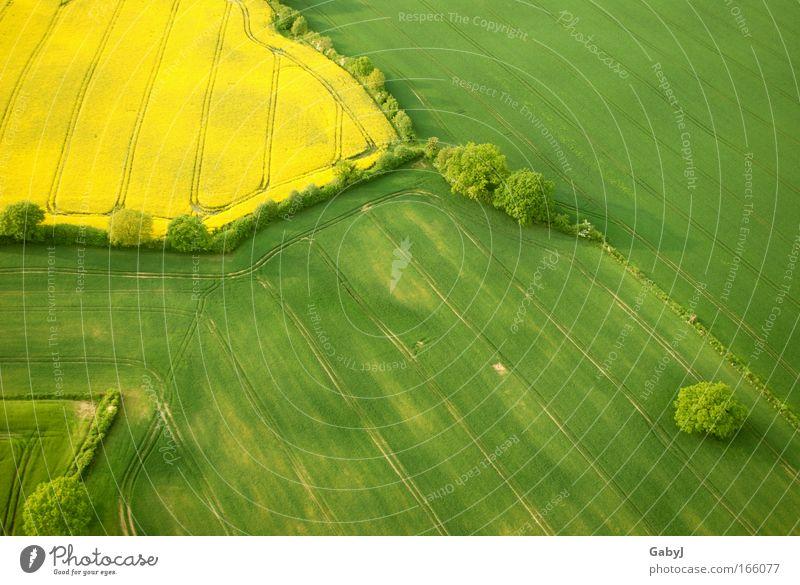 Rapsflicken Farbfoto Luftaufnahme Muster Menschenleer Textfreiraum rechts Textfreiraum unten Tag Sonnenlicht Vogelperspektive Umwelt Landschaft Pflanze Erde