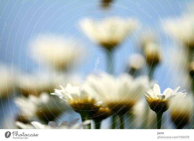 flower Farbfoto Außenaufnahme Menschenleer Textfreiraum oben Tag Sonnenlicht Starke Tiefenschärfe Zentralperspektive Natur Pflanze Tier Frühling Sommer Blume