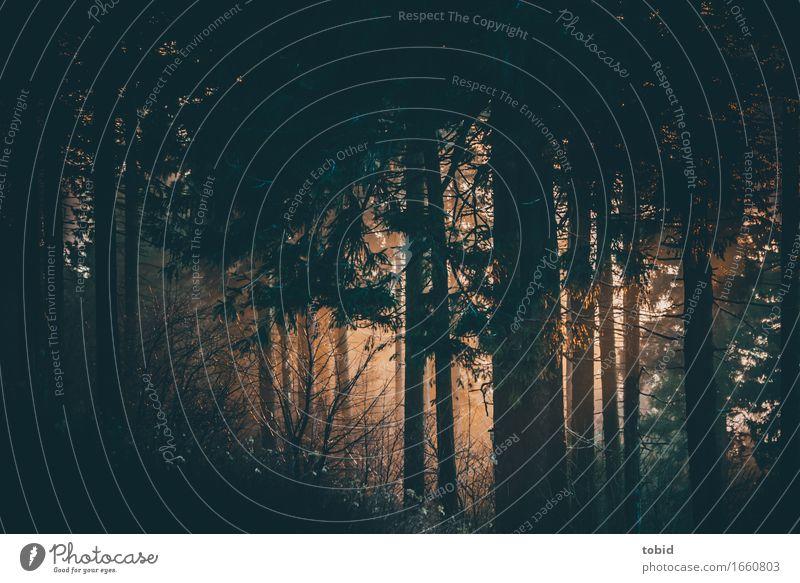 Lichtspiele Natur Pflanze Sonnenaufgang Sonnenuntergang Sonnenlicht Schönes Wetter Nebel Baum Gras Sträucher Moos Hügel ästhetisch außergewöhnlich dunkel