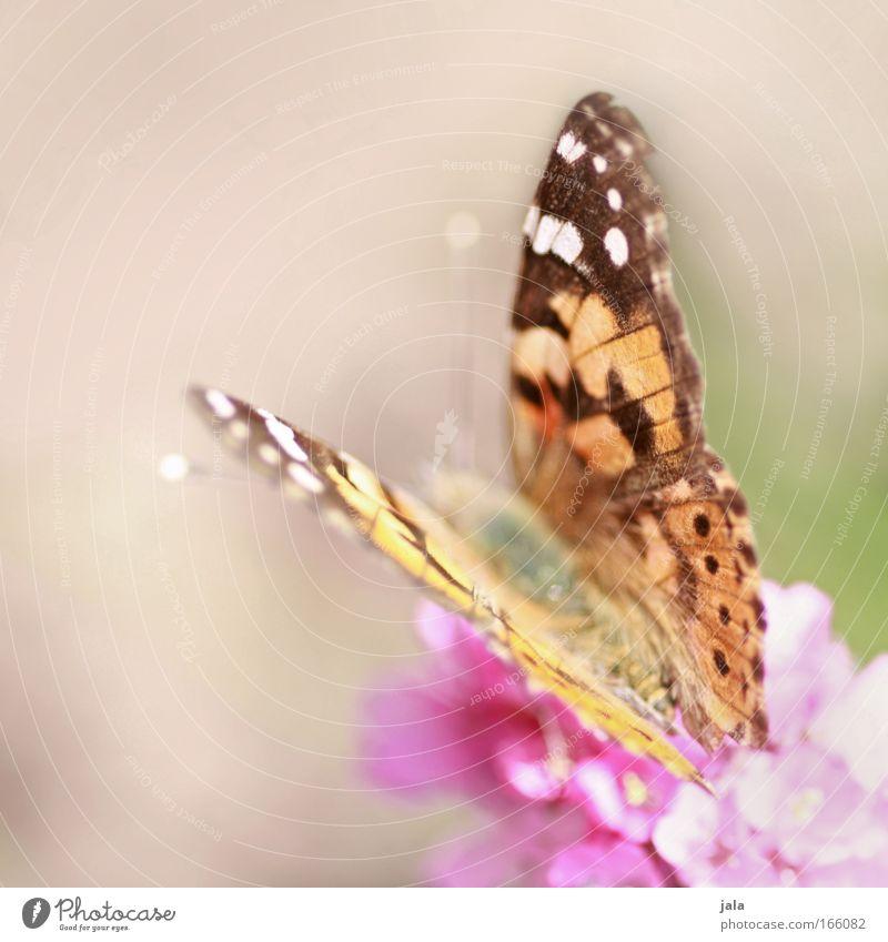 Flügelwesen schön Sonne Blume Tier Wiese Blüte Frühling Park hell Feld rosa fliegen frei sitzen Fröhlichkeit ästhetisch