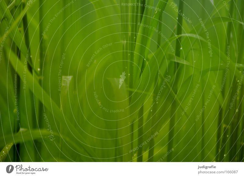 Gras Natur grün Pflanze Sommer Wiese Frühling Regen Umwelt Wachstum Schönes Wetter Umweltschutz