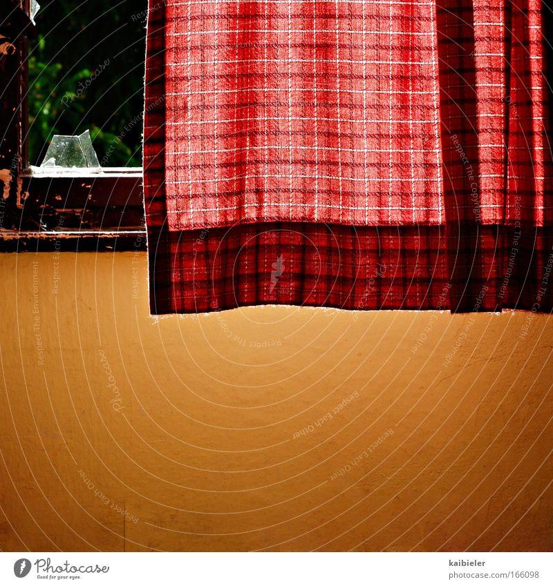 Ohne Goldkante grün rot Einsamkeit gelb Wand Fenster Mauer Wohnung retro Häusliches Leben Vergänglichkeit Innenarchitektur Tapete Verfall Vergangenheit Gardine