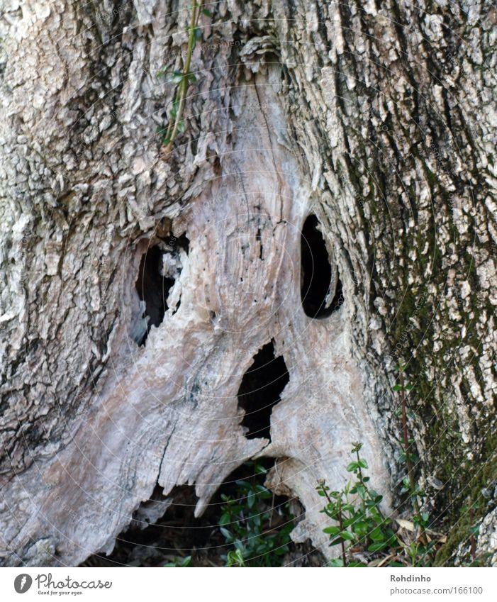 skull tree Natur grün Baum schwarz Gesicht Auge Tod Gefühle Holz grau Kopf braun wild natürlich Mund Nase