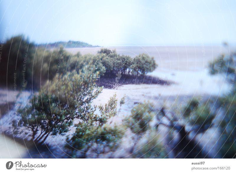 aussi landscape Natur Himmel Pflanze Sommer Leben Sand Küste Umwelt Erde Klimawandel Moor Sumpf Wäldchen