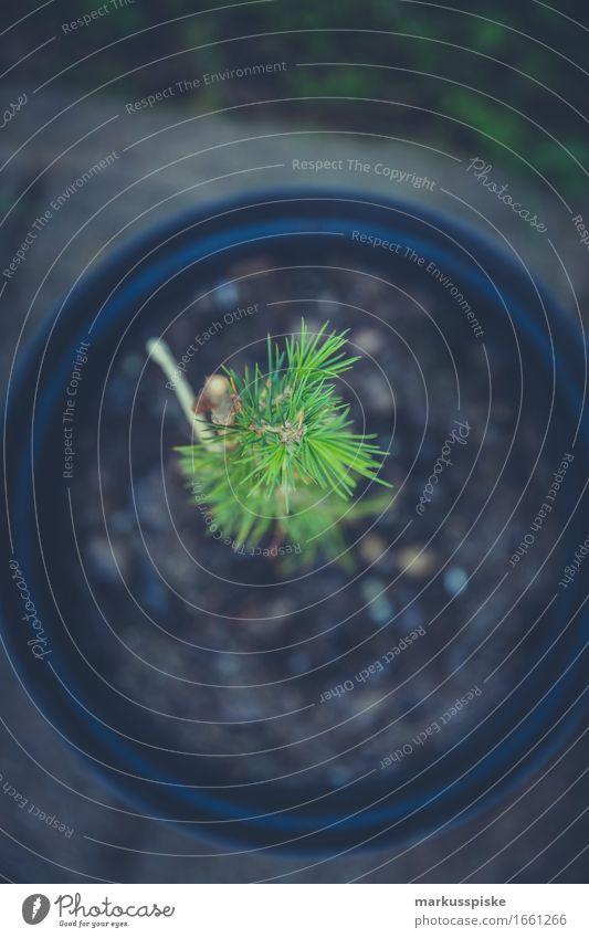 baumschule aufzucht Freizeit & Hobby Haus Garten Arbeit & Erwerbstätigkeit Beruf Handwerker Gartenarbeit Gärtner Gärtnerei Baumschule Baumschössling züchten