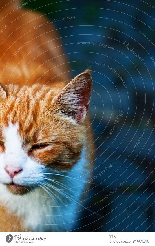 Mi-jau Tier Haustier Katze 1 Gefühle Freude Glück Fröhlichkeit Zufriedenheit Lebensfreude Mut Tatkraft Tierliebe Hochmut Stolz ästhetisch einzigartig elegant