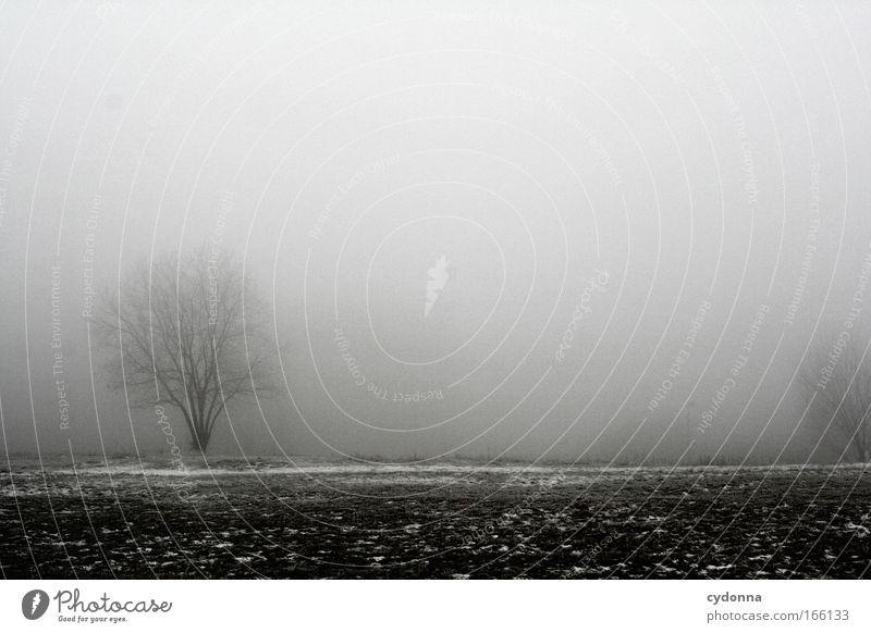 Verloren Natur Himmel Baum Winter ruhig Einsamkeit Ferne Leben kalt Wiese Gefühle Gras Freiheit träumen Traurigkeit Landschaft