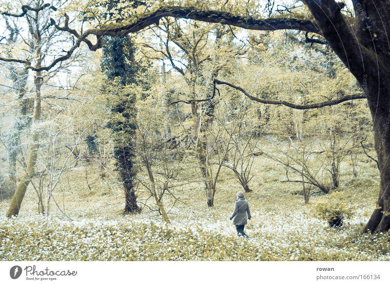 wandeln Frau Baum Einsamkeit Erwachsene Wald Wege & Pfade träumen gehen Freizeit & Hobby wandern Spaziergang Leichtigkeit Waldlichtung
