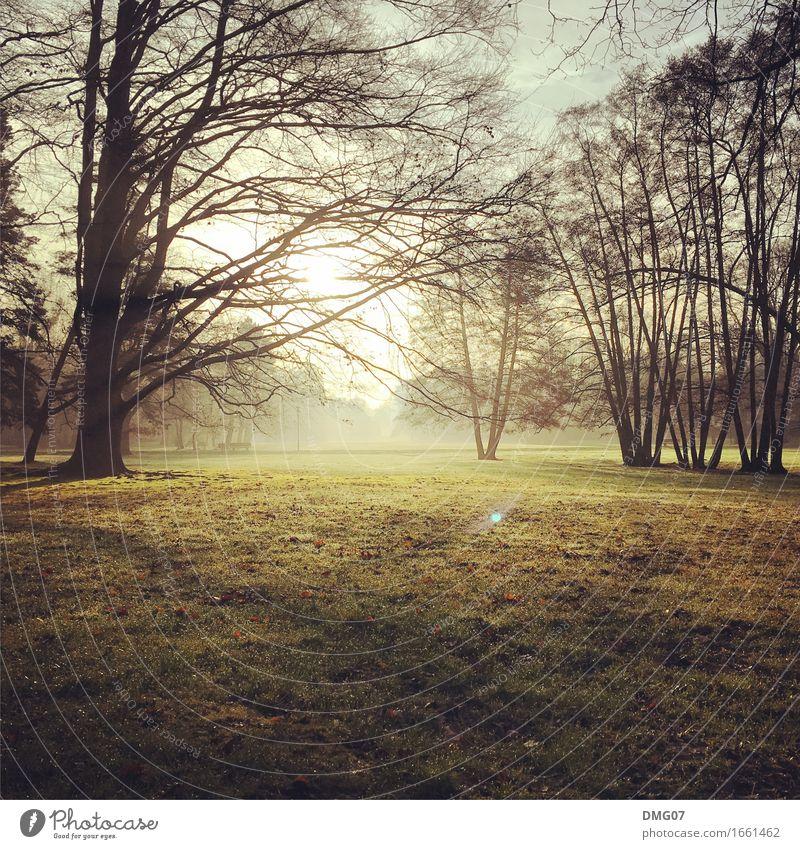 Park Himmel Natur Pflanze Sommer Stadt Sonne Baum Landschaft Wald Umwelt Gefühle Herbst Frühling Lifestyle Wiese Gras