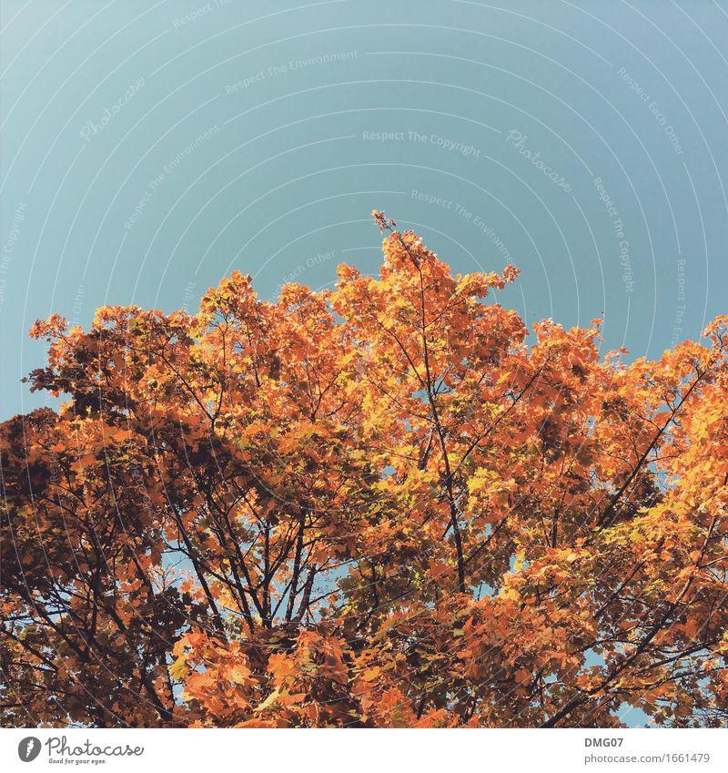 Up in the Sky Himmel Natur blau Sommer Sonne Baum Blatt Winter Wald Wärme Umwelt Gefühle Herbst Frühling Lifestyle Stimmung