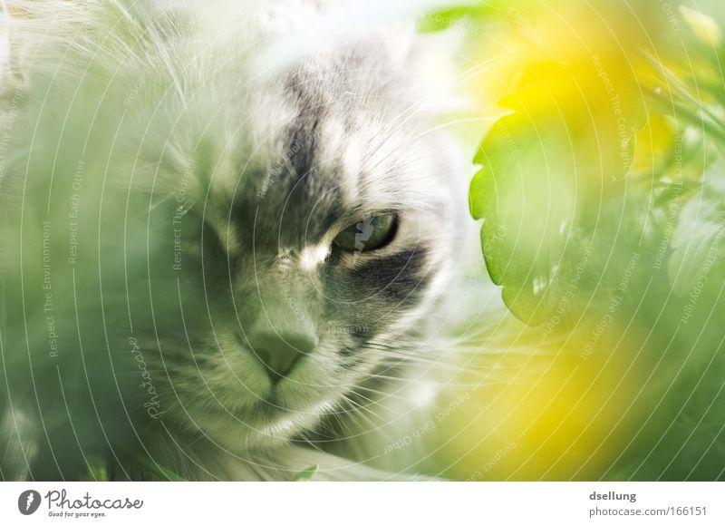 Ich kann dich sehen! - Mein Fuffzichstes. Natur Blume grün Pflanze Tier gelb Blüte Frühling grau Katze ästhetisch Tiergesicht Sauberkeit beobachten Balkon Blick