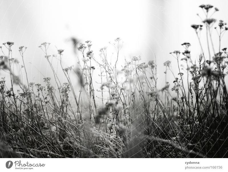 Kälte Natur Blume Pflanze Winter Einsamkeit Leben Schnee Gefühle Tod Gras Bewegung träumen Traurigkeit Eis Nebel Wind