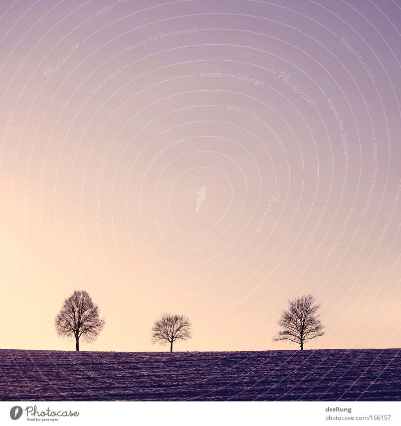Drei Natur schön Baum Pflanze Winter schwarz kalt Landschaft rosa Horizont ästhetisch Romantik Frieden violett Kitsch Idylle