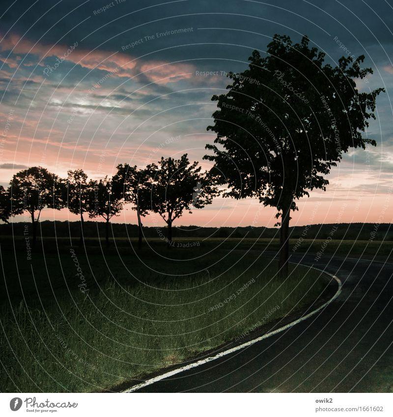 Abendkurve Umwelt Natur Landschaft Pflanze Himmel Wolken Horizont Sommer Schönes Wetter Baum Gras Verkehr Verkehrswege Straße Straßenrand Fahrbahnmarkierung