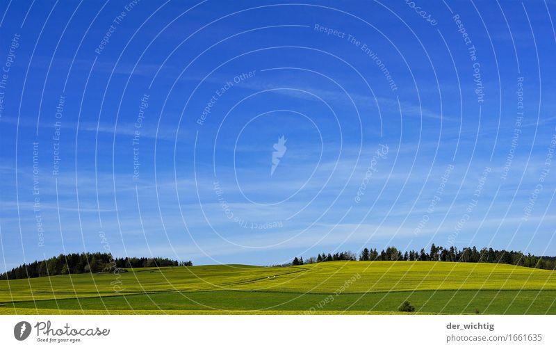 Raps am Hang Öl Landwirtschaft Forstwirtschaft Umwelt Natur Landschaft Himmel Horizont Sonne Sommer Schönes Wetter Wärme Nutzpflanze Feld Wald Unendlichkeit