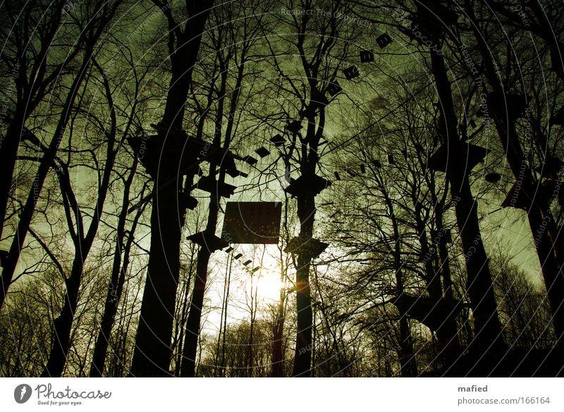 Baumbewohner Farbfoto Gedeckte Farben Außenaufnahme Abend Licht Schatten Kontrast Silhouette Gegenlicht Froschperspektive Weitwinkel Klettern Bergsteigen Wald