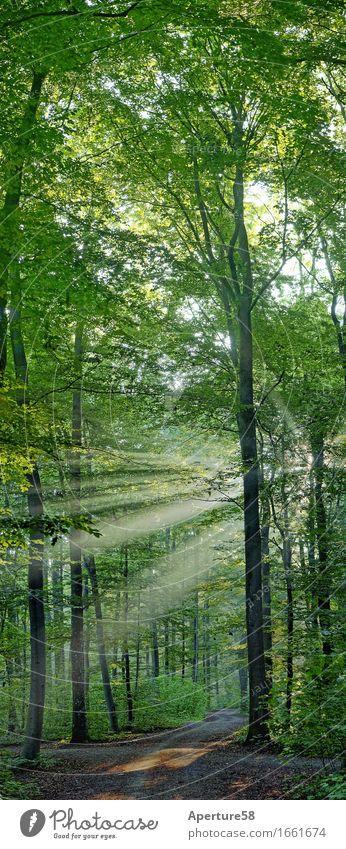 Wald 1 Natur Pflanze Sommer Baum Landschaft Sträucher Perspektive Schönes Wetter