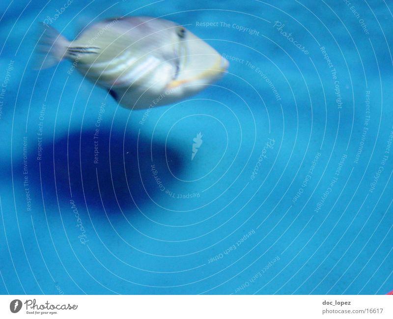 fischbewegung mehrfarbig Meer Unschärfe Fisch blau exotisch Wasser meeresbewohner Schatten