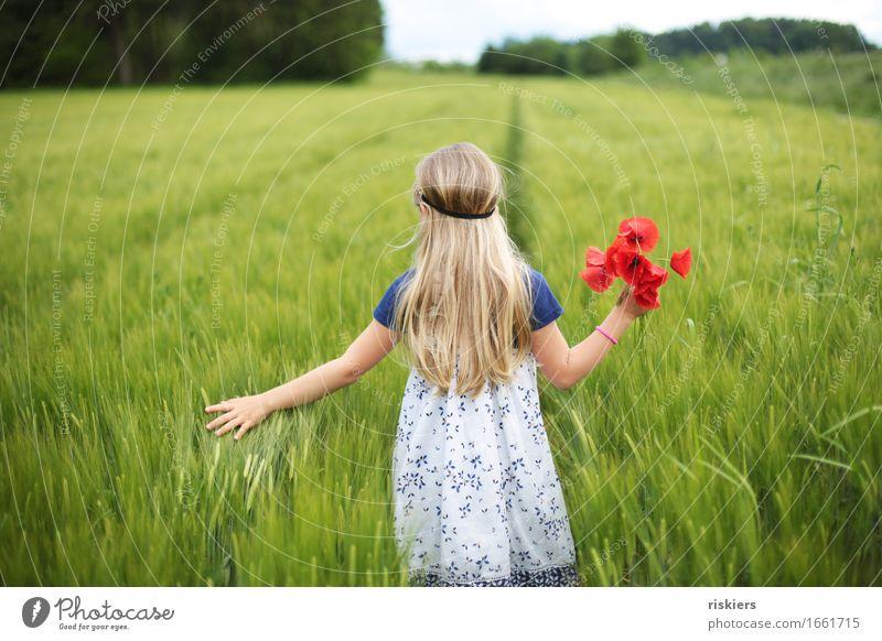 durchs Feld streifen Mensch Kind Natur Pflanze grün Sommer Blume Erholung rot ruhig Mädchen Umwelt Frühling natürlich feminin träumen