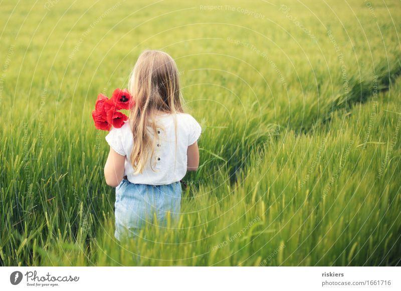 Mohntage Mensch feminin Kind Mädchen Kindheit 1 3-8 Jahre Umwelt Natur Landschaft Frühling Sommer Schönes Wetter Pflanze Blume Feld entdecken Erholung